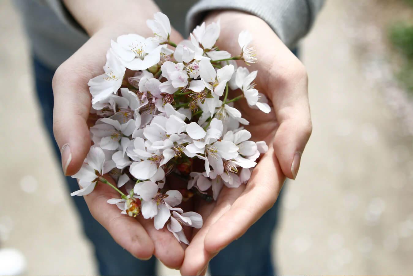 Hands Flower